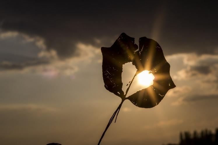 sun-622740_1920.jpg